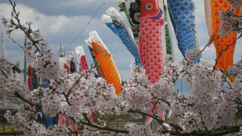 竹原 桜だより🌸…|瀬戸内の宿 竹原シーサイドホテル