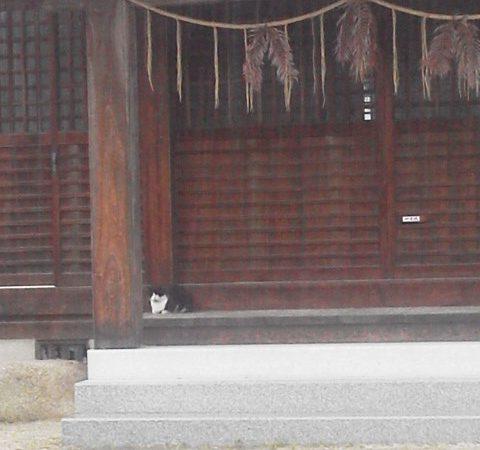 梅雨明けを待ちわびて…|瀬戸内の宿 竹原シーサイドホテル